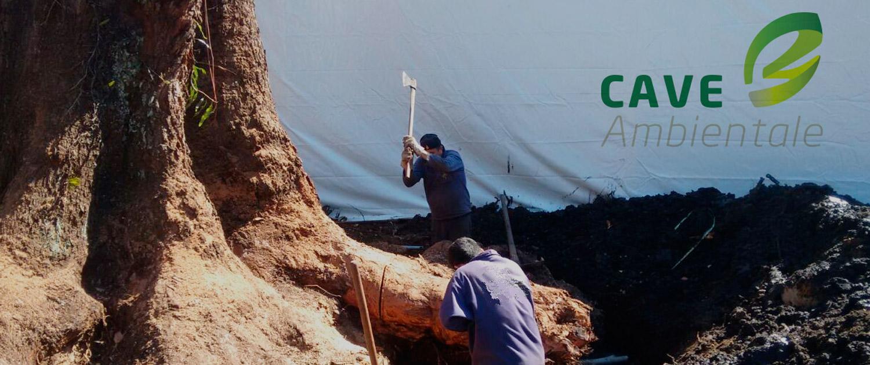 cupressao-vegetal-cave-ambientale-raiz