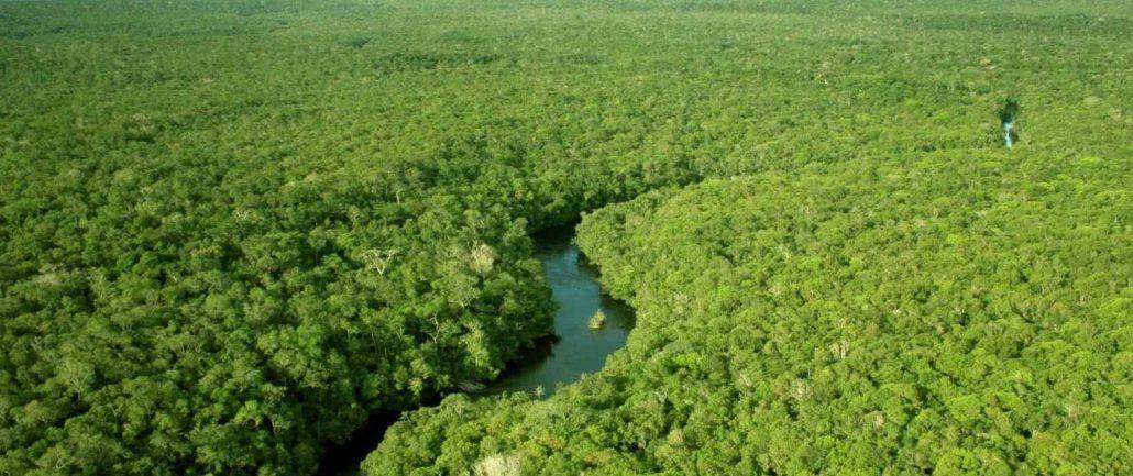 reflorestamento-arboreo-cave-ambientale